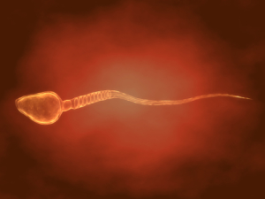 Sperm Motility and Cell Phone Usage